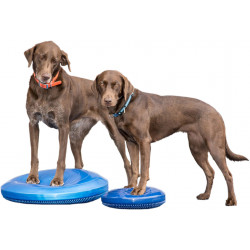 FitPAWS Balance Disc Razleberry