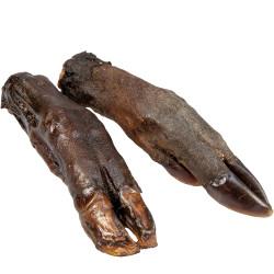 Tørrede vildsvine fødder